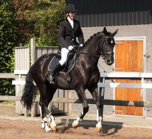 Reiterin in Dressur-Klamotten auf schwarzem Pferd