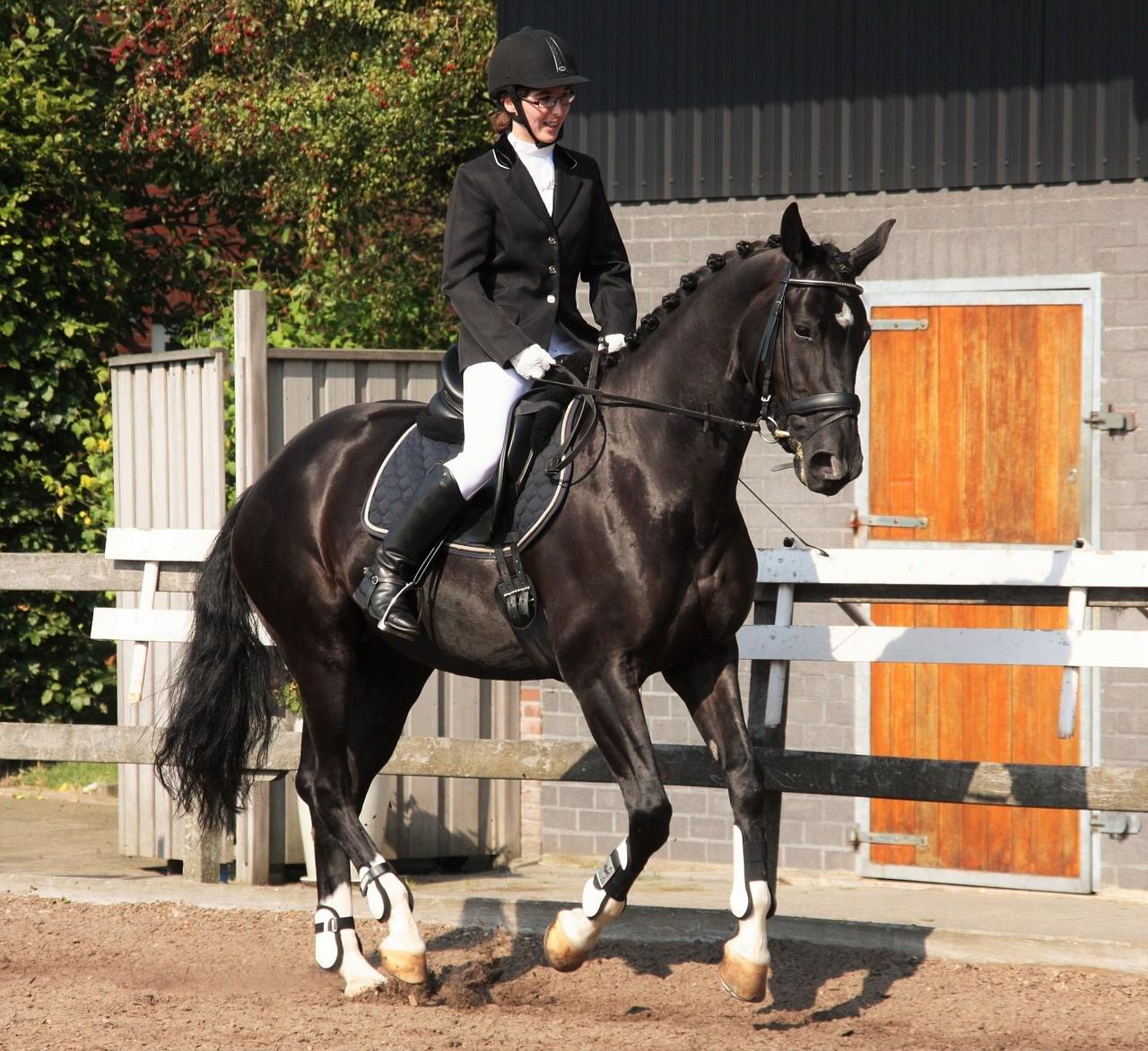 Pferd Und Sport Live Stream