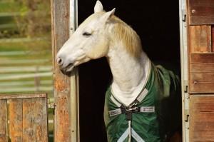 Pferd mit Decke in Tür