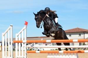 Springendes Pferd auf Sprungplatz
