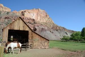 Pferd vor Offenstall