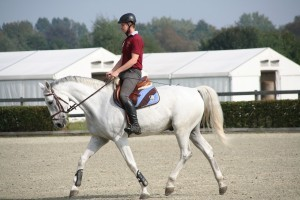 Pferdewirt bewegt Reitpferd