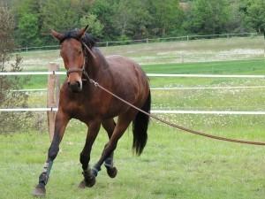 Pferd im Trab