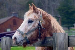 Pferd vor Reiterhof