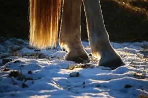 Fesselbeugen eines Pferdes