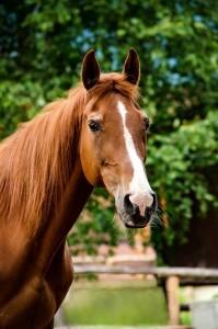 Du willst dein Traumpferd kaufen?